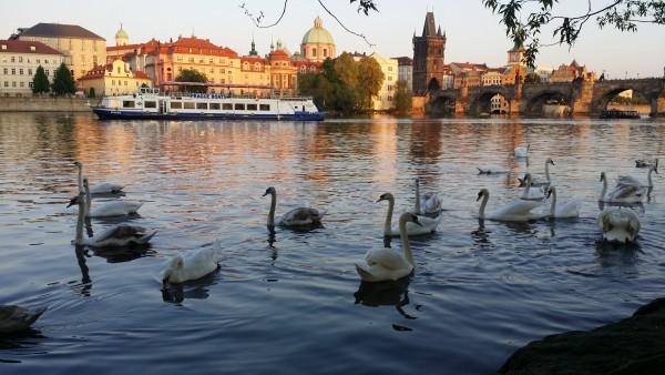 Прогулки на сигвеях в Праге