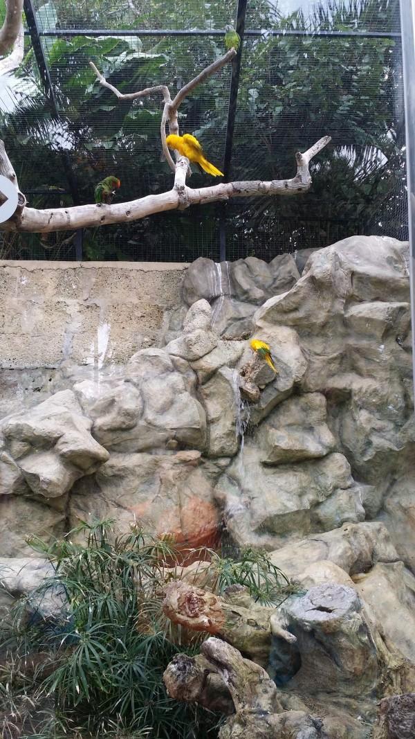 Лоро Парк Тенерифе фото