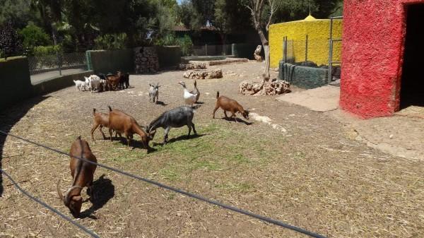 Сафари парк Майорка