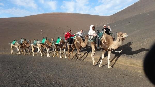 Караван верблюдов фото