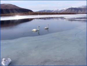 Где покататься на лыжах летом в России