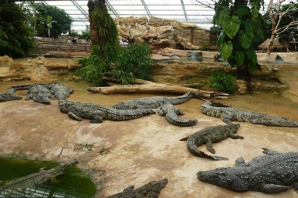 Ферма крокодилов в Веселовке