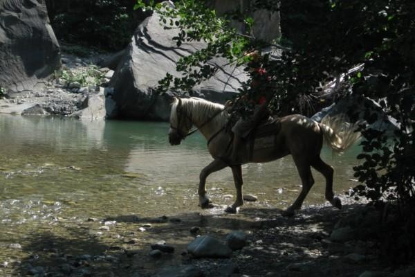 Конный тур в Пляхо