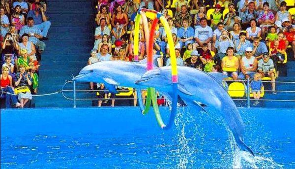 Дельфинарий Аквамир фото