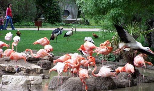 Аквариум и зоопарк в Мадриде