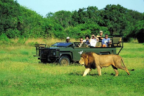 Африканское сафари или поездка в Кению