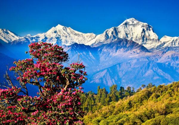 Едем в Непал