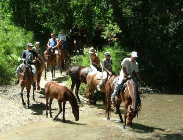 Прогулки на лошадях в Большом Утрише