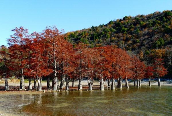 Роща болотного кипариса (Сукко) в Анапе