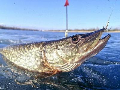 Астрахань рыбалка базы отдыха цены эконом