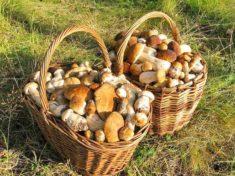 Где в Ленинградской области пошли грибы