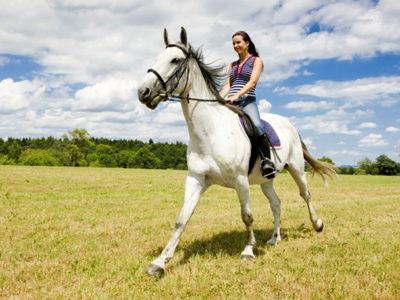 Где покататься на лошадях в СПб