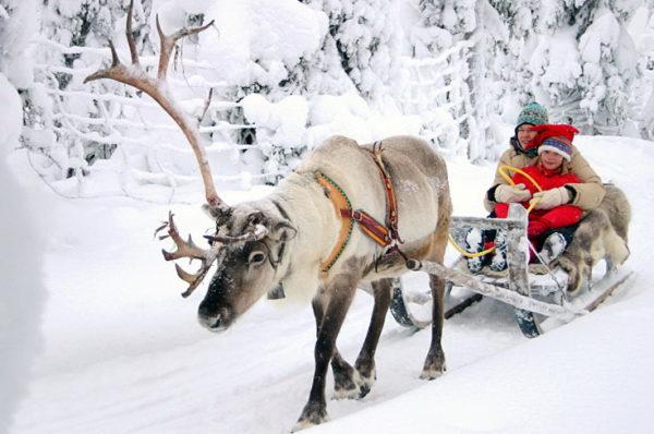 Катание на оленях и собаках в Финляндии
